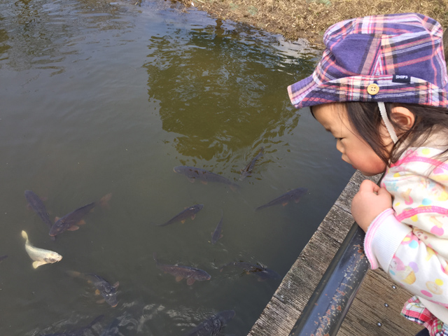 ふなばしアンデルセン公園太陽の池の魚