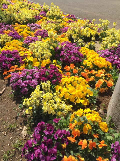 ふなばしアンデルセン公園花壇