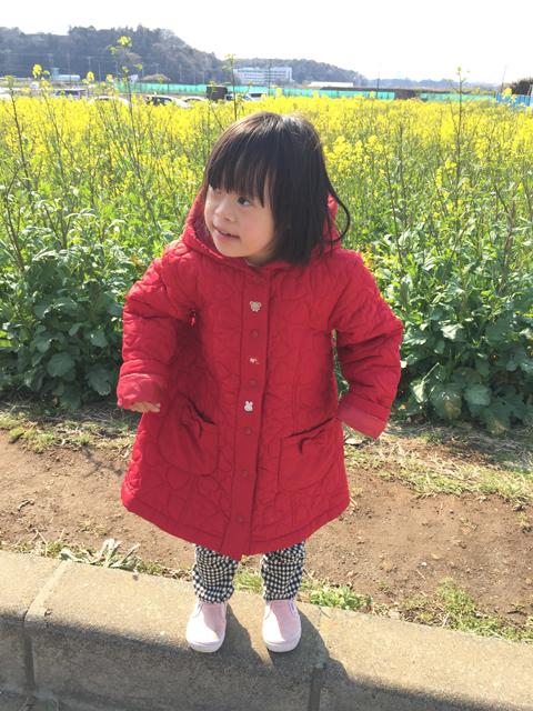 ダウン症優菜の花畑