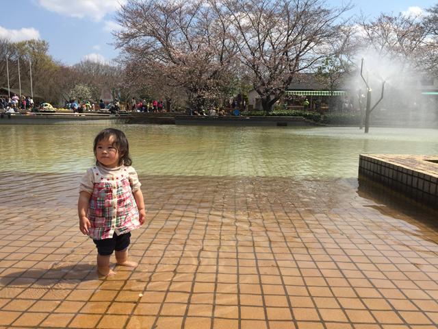 アンデルセン公園桜