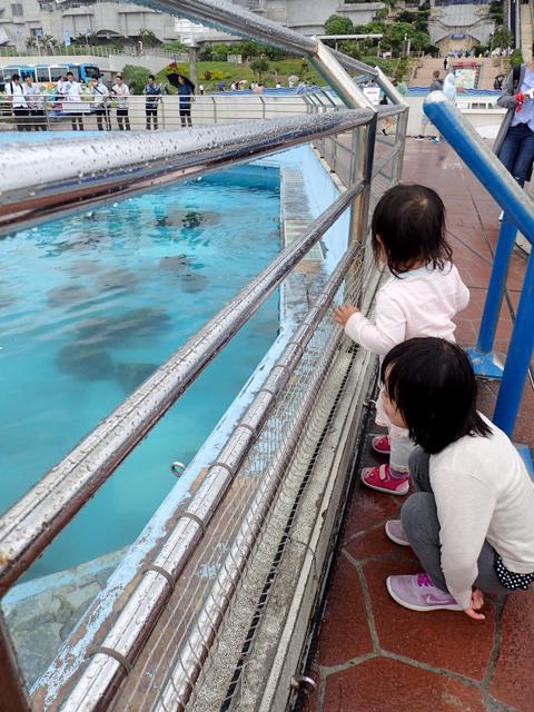 美ら海水族館ウミガメプール