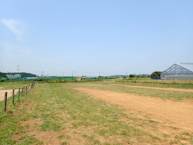 臨時駐車場は草や土の地面