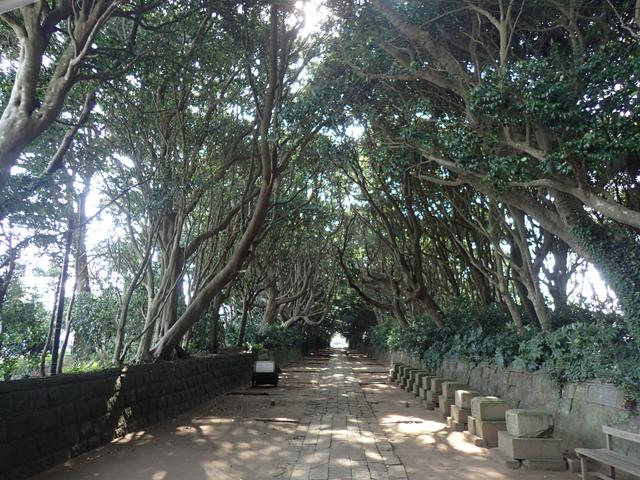 酒列磯前神社木のトンネル