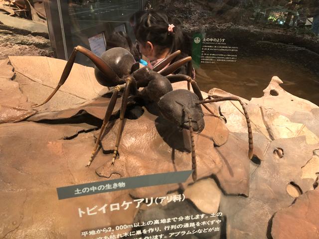 トビイロケアリの模型