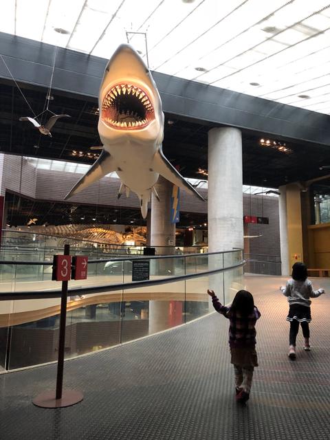 サメ模型ゆすい姉妹