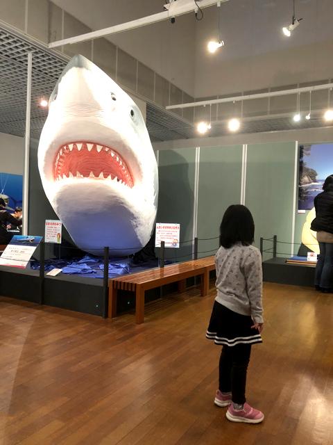 サメ模型見て固まるダウン症優