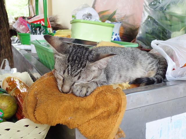パタヤ寺院のネコ