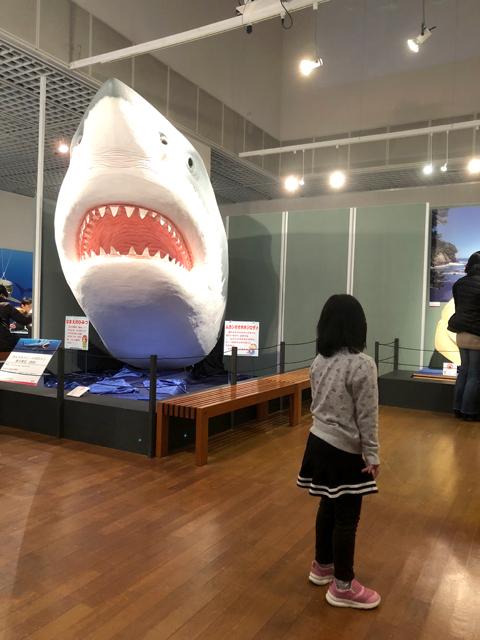 ダウン症優サメにビビる