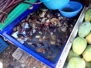 クローントゥーイ市場のサワガニ