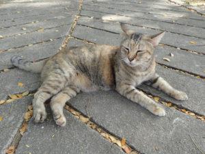 ルンピニー公園にいた猫